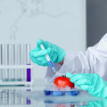 Tomato dna change microbiology experiment Royalty Free Stock Image