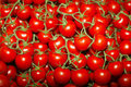 Tomato freshly picked organic tomatoes on farmers market Royalty Free Stock Photo