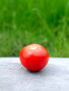 Tomato On The Grass Background