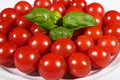 Tomato many tomatoes on plate with basil Royalty Free Stock Photography