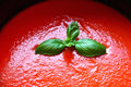Tomato pasta sauce and basil Royalty Free Stock Photo