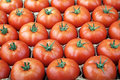 Tomato ripe ready for consumption organic grown Stock Images