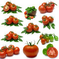 Tomato Sampler Stock Photography