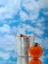 Tomato in silver bucket Stock Images