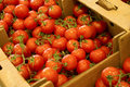 Tomato some fresh tomatos in supermarket Royalty Free Stock Photo