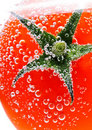 Tomato in water Royalty Free Stock Photo