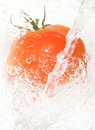 Tomato and water Stock Photography