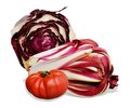 Tomatoe and radicchio one different types of of treviso origins on white background Stock Images