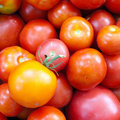 Tomatoes. Royalty Free Stock Photo