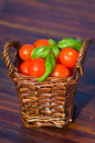 Tomatoes with basil in basket outdoors Stock Photography