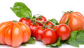 Tomatoes on basil isolated white Royalty Free Stock Photo