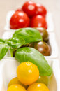 Tomatoes and basil in vertical format wet Royalty Free Stock Image