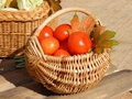 Tomatoes in the basket fall stock photos composition decorated with maple leaves thanksgiving day photo Royalty Free Stock Image