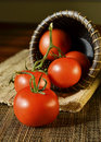 Tomatoes and a basket on a table Royalty Free Stock Images