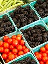 Tomatoes and Blackberries Royalty Free Stock Photos