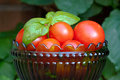 Tomatoes bowl with organic cultured small red and basil leaves Royalty Free Stock Images
