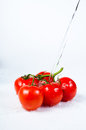Tomatoes branch Royalty Free Stock Photo