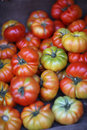 Tomatoes of different maturity Royalty Free Stock Photo
