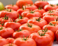 Tomatoes at the Farmer's Market Royalty Free Stock Photo
