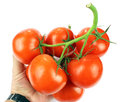 Tomatoes in the human hand on white background Stock Photography