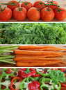Tomatoes, kale, carrots, peppers Stock Photography