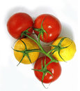 Tomatoes and lemons on the same branch red grow a green with yellow hybrids agriculture odd man out a white background three Stock Photography