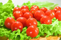 Tomatoes and lettuce Stock Image
