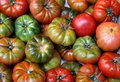 Tomatoes in the market Royalty Free Stock Photo