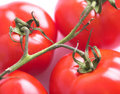 Tomatoes on stem Stock Photos