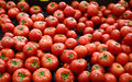 Tomatoes in vegetable market Royalty Free Stock Photo