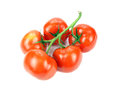 Tomatoes on vine fresh ripe white background Stock Image