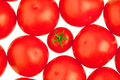 Tomatoes white background many Royalty Free Stock Photos