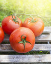 Tomatoes on wooden box on background of sunlight and grass in garden Stock Image