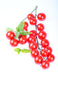Tomatos isolated cherry type on white background with basil Royalty Free Stock Image