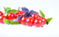 Tomatos isolated cherry type on white background with basil Royalty Free Stock Photo