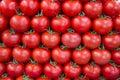 Tomatos in row as background Royalty Free Stock Photo