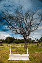 A tombstone under a dying tree at muslim cemetery Royalty Free Stock Photography