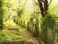 Tombstones in Highgate Cemetery Royalty Free Stock Photo