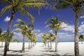 Tonalità caraibica - riga delle palme che piombo al mare Fotografia Stock Libera da Diritti