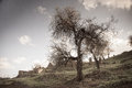 Toned image of almond trees and ruins in abandoned village in Tylliria, Cyprus Royalty Free Stock Photo