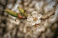 Toned spring flowers tree branches with young flowers bokeh Royalty Free Stock Photo
