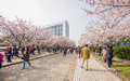 Tongji university cherry blossom festival shanghai march Stock Images