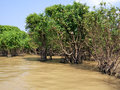 Tonle Sap flooded forest Royalty Free Stock Images