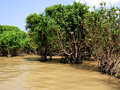 Tonle Sap flooded forest Stock Images
