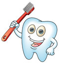 Tooth mascot smiling teeth with a brush clean teeth for health concept perfect for a dental or fairy illustration Royalty Free Stock Images