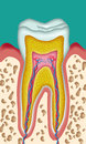 Tooth section of a schematic drawing cutout Stock Photography