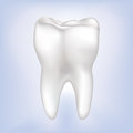Tooth Vector illustration. Isolated. Royalty Free Stock Photo