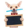 Toothbrush dog Royalty Free Stock Photo