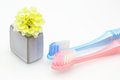 Toothbrush in a white background pictured toothbrushes with kalanchoe vase Stock Photography