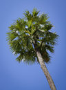 Top of coconut palm trees Royalty Free Stock Photo